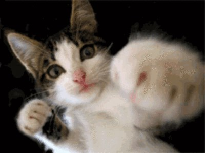 gif cat punching - 7809993728