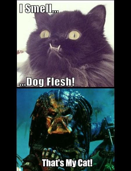 Predator kitty Cats funny - 7810334464