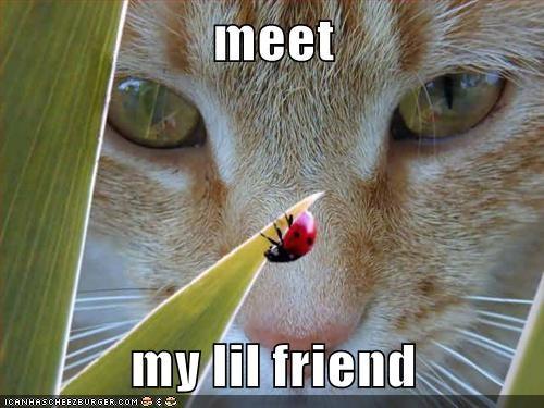 plants cute Cats lady bugs - 7810425088