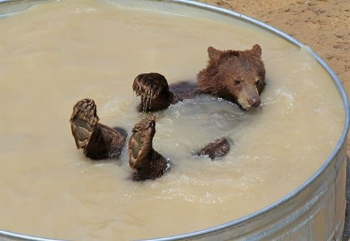 summer,bears,tub,bath,swim