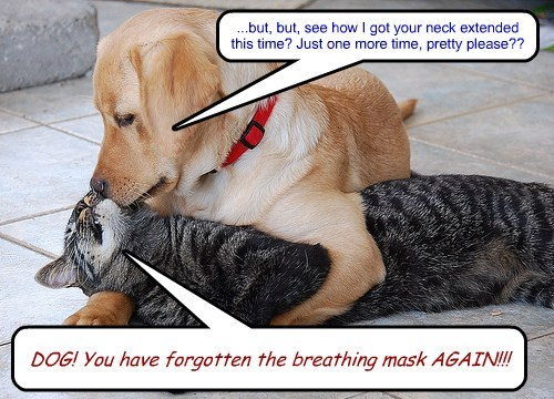 DOG! You have forgotten the breathing mask AGAIN!!! ...but, but, see how I got your neck extended this time? Just one more time, pretty please??
