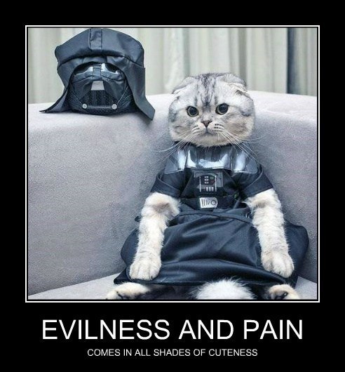 star wars,cuteness,dark side cats