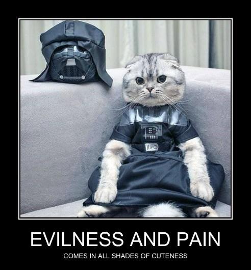 star wars cuteness dark side cats - 7811097856