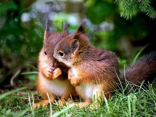 cute squirrels nuts - 7811554048