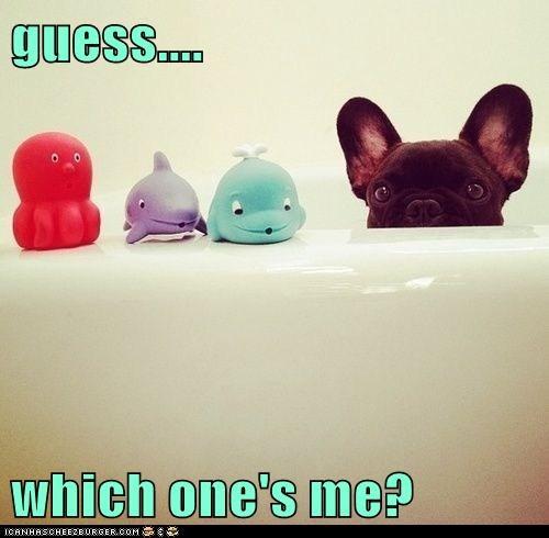 toys puppies bath cute - 7812585728