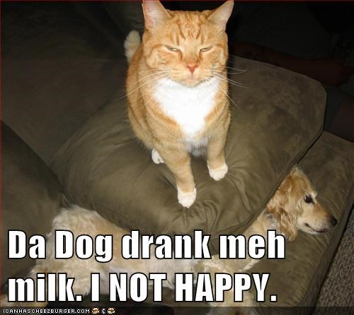 dogs,milk,Cats