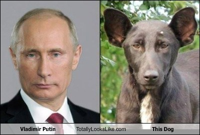 dogs,totally looks like,Putin,funny