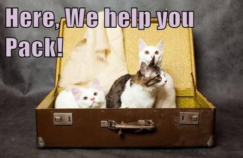 packing,suitcase,Travel,Cats