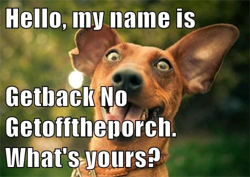 confusion,dogs,names,funny