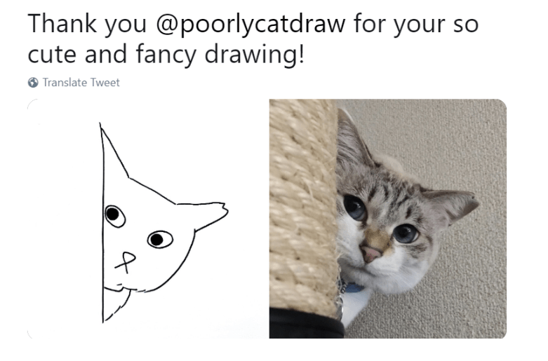 drawing funny cats funny tweets Cats - 7813381