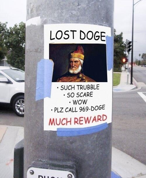 doge shibe lost doge - 7813382656