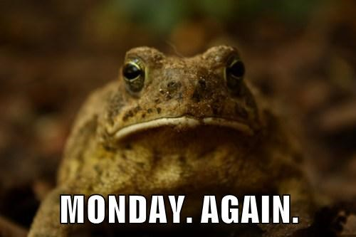 toads monday frogs