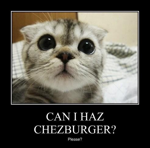 Cheezburger Image 7814713856