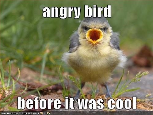 angry birds birds eggs pig funny - 7814872320