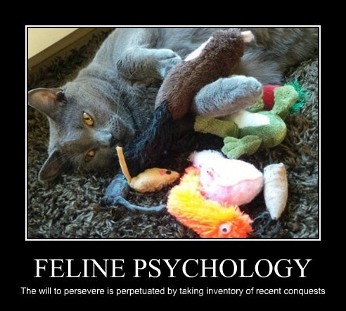 FELINE PSYCHOLOGY The will to persevere is perpetuated by taking inventory of recent conquests
