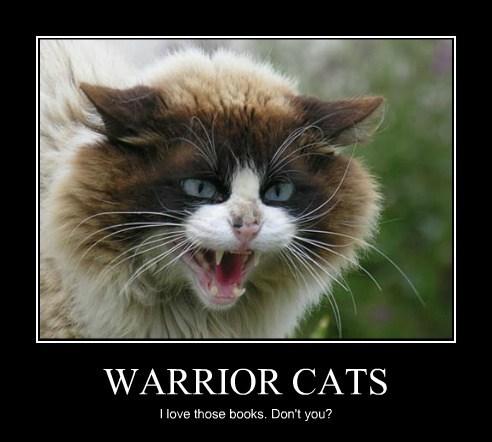 Warrior Cats Lolcats Lol Cat Memes Funny Cats Funny Cat