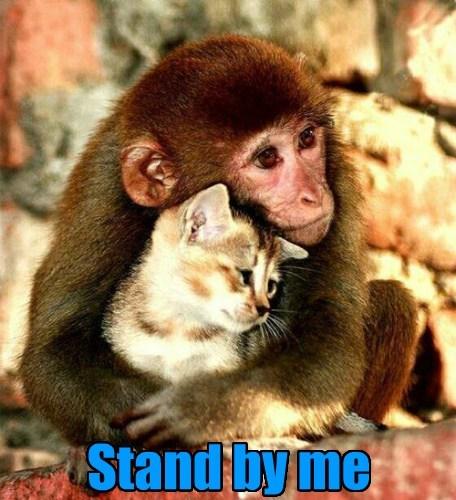 friendship cat monkey