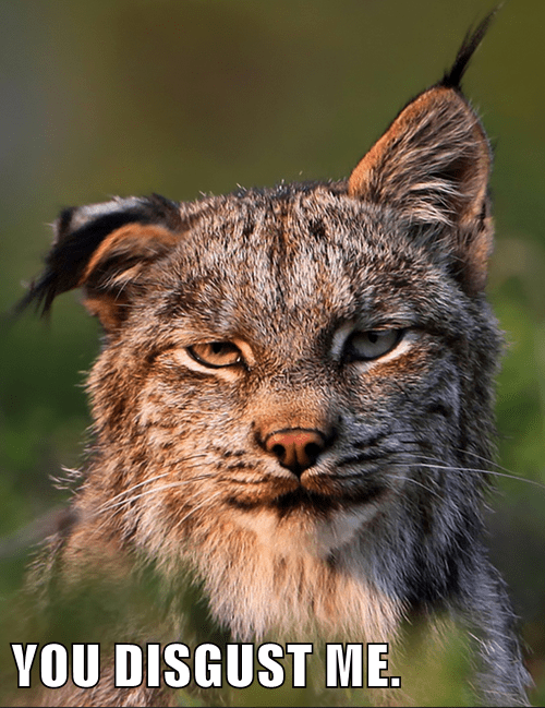 disgust bobcat funny - 7815591424