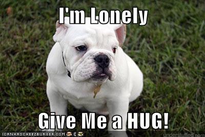 dogs puppies cute hug - 7815649280