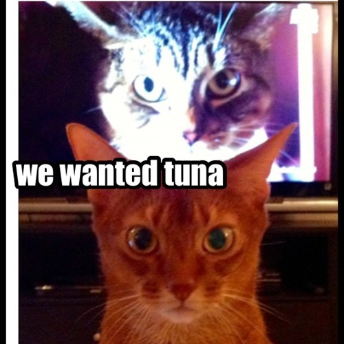 we wanted tuna