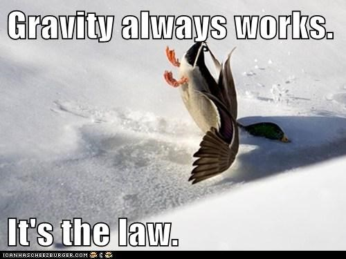 snow falling ducks Gravity - 7815943424