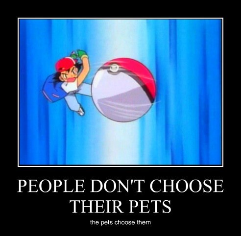 PEOPLE DON'T CHOOSE THEIR PETS the pets choose them