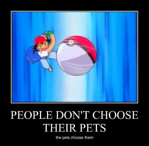 Pokémon pets funny - 7816146688