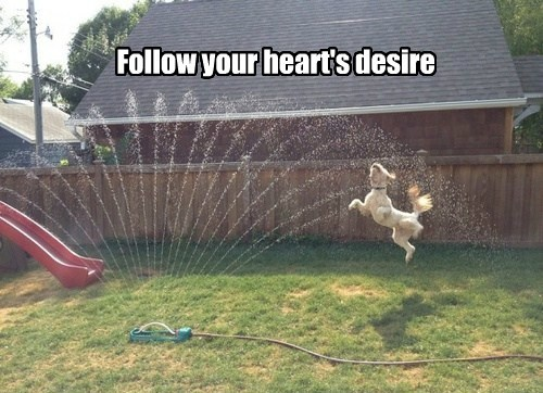 Follow your heart's desire