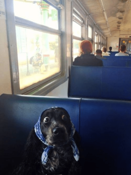 dogs wtf busses the workingman's dilemma funny