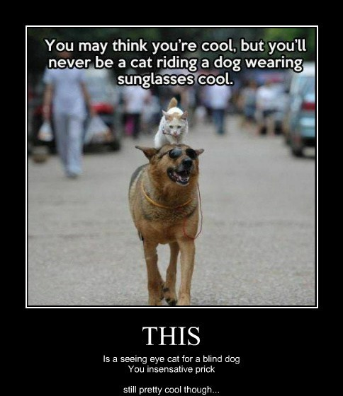 hate,dogs,sunglasses,funny