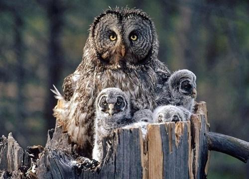 birds cute owls - 7816763904