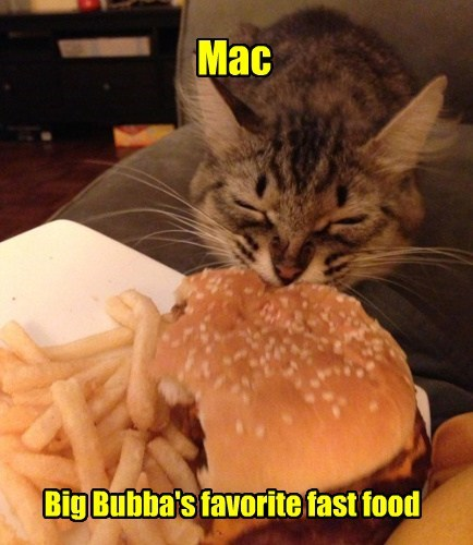Cheezburger Image 7816962560