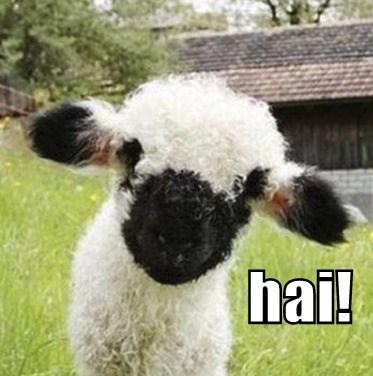 cute sheep lambs wool - 7816988928