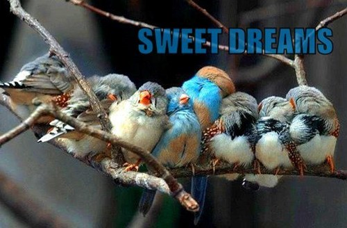 birds cute feathers sleeping - 7816989952