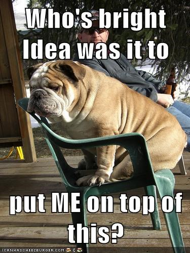 chairs bulldogs sit funny - 7817040640