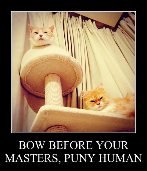 bow,Cats,funny,masters