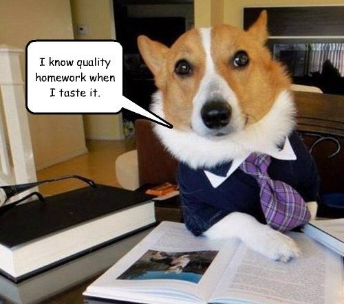 homework dogs tasty - 7817426176