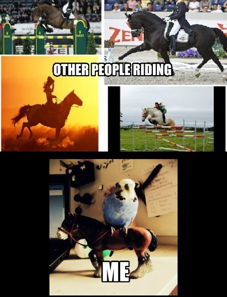 birds,riding,horses,funny