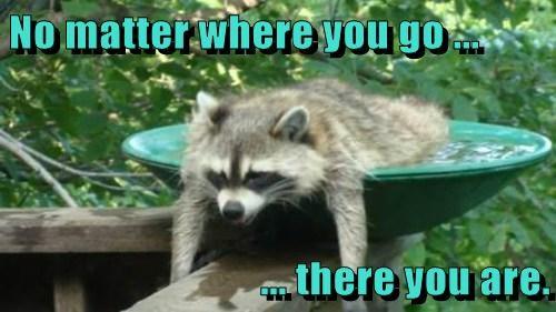 sayings raccoons funny - 7817644032