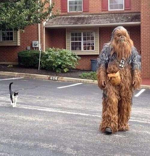 cat star wars chewbacca - 7817644288