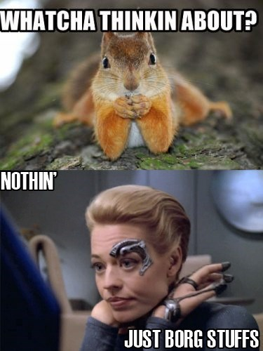 seven of nine,squirrel,voyager