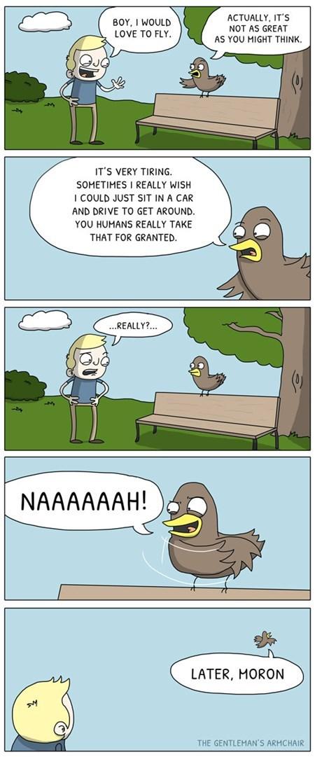 nature birds funny web comics