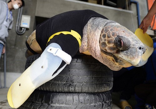 medicine,artificial limbs,science,turtle