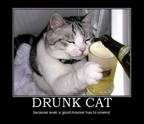 cat,drunk,funny,animals