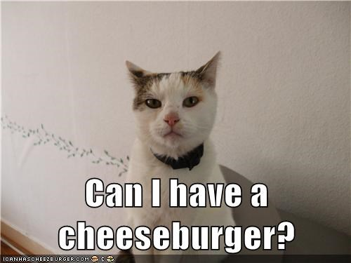 Cheezburger Image 7817959680