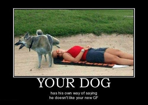dogs girlfriend funny - 7818175744