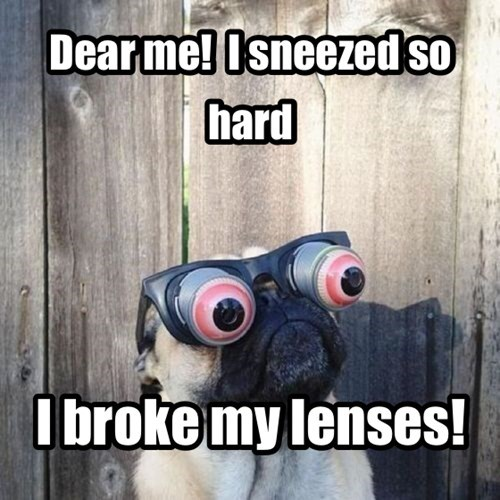 dogs goggles eyes sneeze - 7818313216