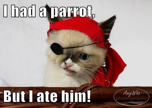parrots eye patch pirates funny