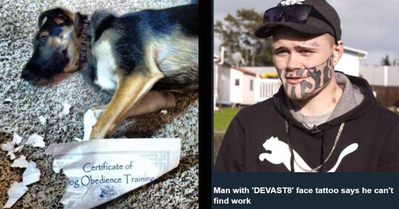 fail pics | Certificate of Obedience Training dog lying down surrounded by shreds of a doggy school diploma | Man with 'DEVAST8' face tattoo says he can't find work MSN UK 2 hours ago young man with tattoo on his face reading DEVAST8' has said he is having difficulty finding work after being released prison