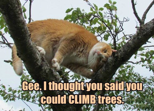 Gee. I thought you said you could CLIMB trees.